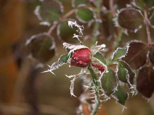 Frosty Photography by CSNProductions